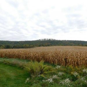 Land for Sale in Russell PA